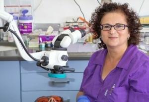 """ד""""ר שטיינבוק נלי - Dr Nelly Steinbock. מומחית לטיפולי שורש בחיפה"""